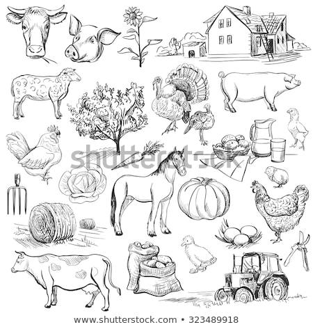 Koe zoogdier veld illustratie hemel Stockfoto © get4net