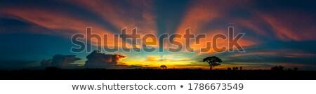 Zonsondergang silhouet bomen dramatisch kleurrijk hemel Stockfoto © smuki