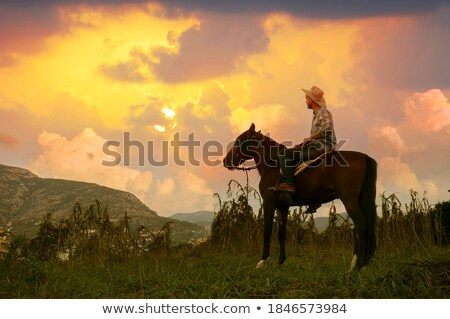 A cowboy's horse Stock photo © bluering