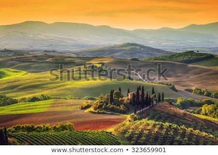 Tuscany landscape at sunrise. Tuscan farm house, cypress trees, hills. Stock photo © photocreo
