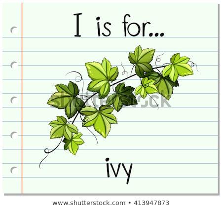 アルファベット ツタ 実例 紙 子供 教育 ストックフォト © bluering