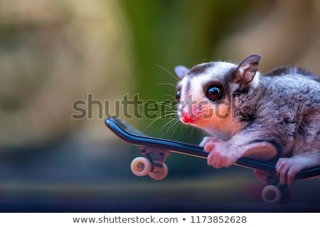 Flying squirrel with happy face Stock photo © bluering
