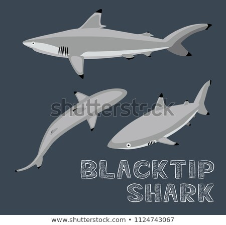 Requin illustration corps mer fond subaquatique Photo stock © bluering