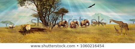 многие животные травой поле иллюстрация природы пейзаж Сток-фото © bluering