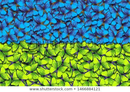 Dois banners borboletas azul preto cinza Foto stock © blackmoon979