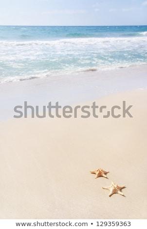 Twee zeester zandstrand Rood Blauw tropische Stockfoto © Mikko