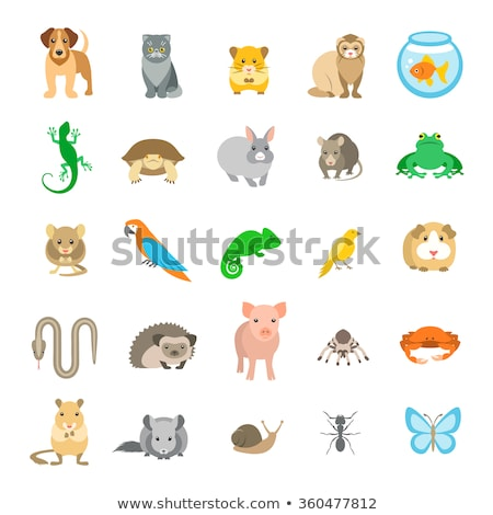 vector set of various home pets stock photo © curiosity