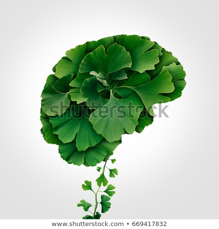 Ginkgo Biloba Brain Stock photo © Lightsource