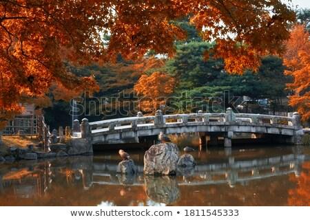 cenário · japonês · jardim · paisagem · folha · rocha - foto stock © daboost
