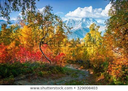 Autumn Landscape with birch forest in the mountains of Georgia Stock photo © Kotenko