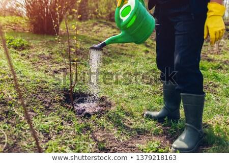 Hand laarzen water planten illustratie tuinman Stockfoto © lenm