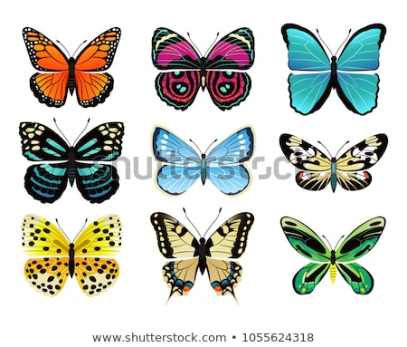Riodinidae Butterfly Metalmark Vector Illustration Stock photo © robuart