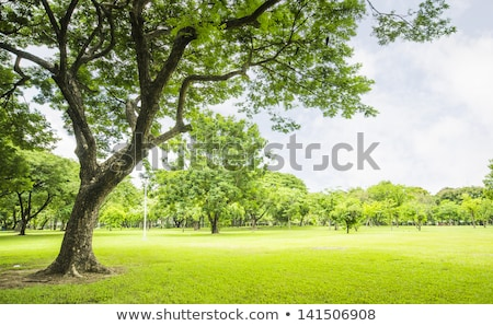 Big tree on green meadow landscape with blue sky with copy space Stock photo © lightpoet