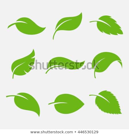 Bio logotipo elemento folhas verdes ícone vetor Foto stock © blaskorizov