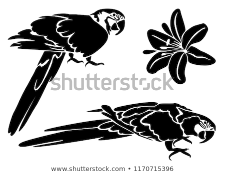 Stencil Tropical Parrot Background Illustration Stock photo © lenm