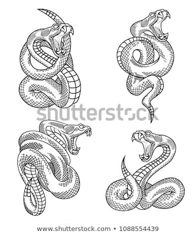 serpente · conjunto · isolado · branco · snakes · carnívoro - foto stock © netkov1