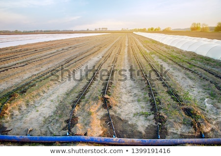 Megművelt mező locsol korai tavasz öntözés Stock fotó © simazoran