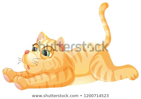 A lazy cat on whiye background Stock photo © colematt
