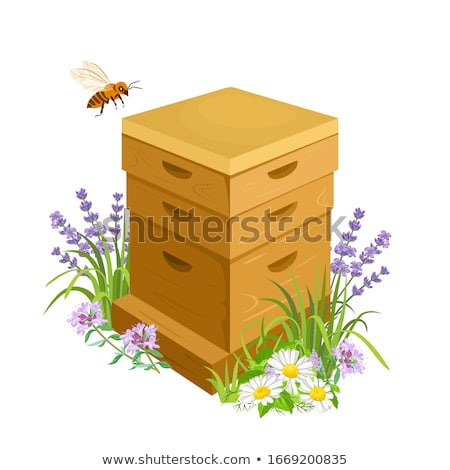 Beehive with Flying Bees Grass with Flowers Vector Stock photo © robuart