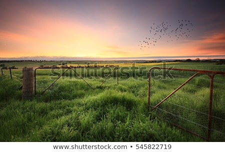 растущий зерновые пшеницы сельский центральный Запад Сток-фото © lovleah