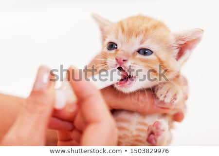 Feeding a cute ginger rescue kitten with a syringe - close up Stock photo © ilona75