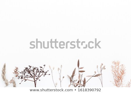 creative wedding composition stock photo © neirfy