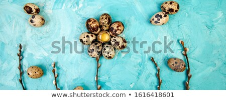 Banner with Quail Easter eggs on blue background with willow branch. Stock photo © Illia
