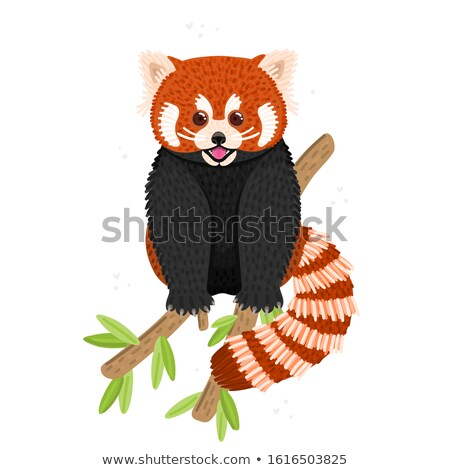 Red panda. Cute fluffy animal sits on branch. Endangered species. Character design Stock photo © user_10144511