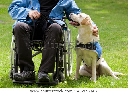 Labrador guide dog and his disabled owner Stock photo © antonio_gravante