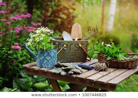 натюрморт весны саду травы садоводства Сток-фото © grafvision
