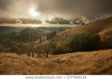 foggy california meadow sunset stock photo © mtilghma