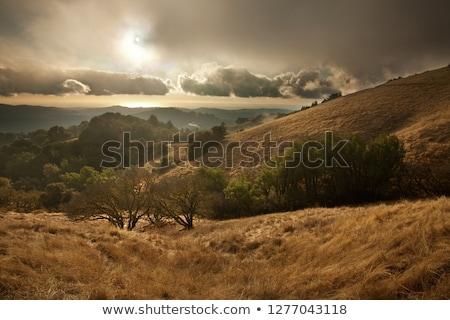 Foggy California Meadow Sunset stock photo © mtilghma