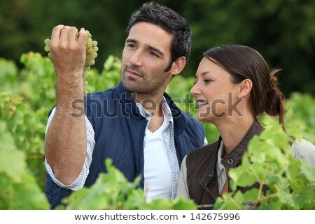 couple of wine producers in front of vines Stock photo © photography33