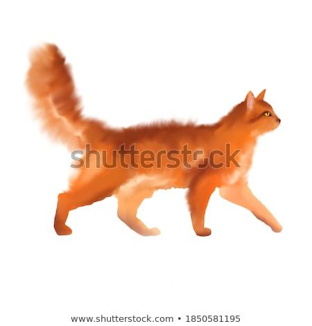 オレンジ 猫 単純な 画像 座って ストックフォト © xochicalco