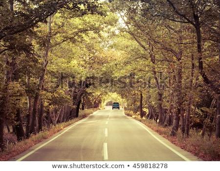 Jesienią jazdy żółty pozostawia liści usługi Zdjęcia stock © Bananna