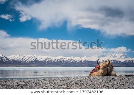 paisagem · tibete · silhueta · pôr · do · sol · água - foto stock © bbbar