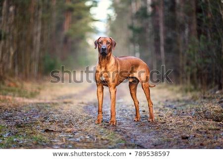 犬 · フロント · 表示 · 階 · 孤立した · 白 - ストックフォト © eriklam