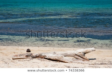 Logs on Caribbean Beach Stock photo © ildi
