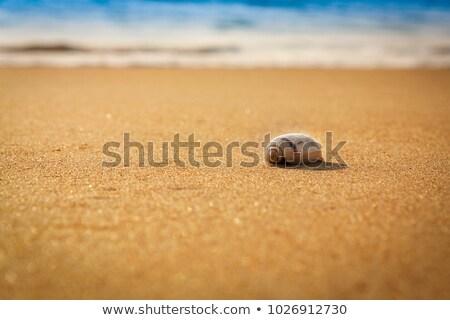 trópusi · tengerpart · alacsony · évszak · sekély · mező · tengerpart - stock fotó © moses