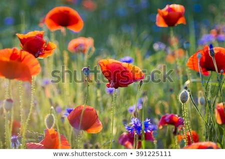цветочный весны цветок искусства области красный Сток-фото © indie
