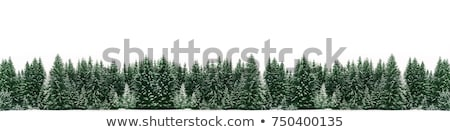 Pine Tree Winter Border Stock photo © Lightsource