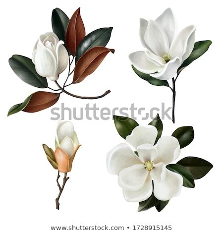 Usine fleurs blanches fleur fleurs nature vert Photo stock © vinodpillai