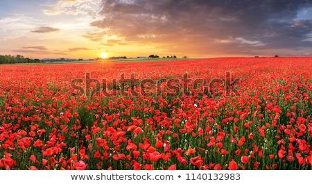красный трава цветок лист Сток-фото © c-foto