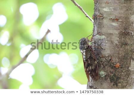 Verano insectos maravilloso sonido caliente Foto stock © rghenry