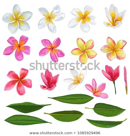 belle · fleurs · branche · tropicales · fleur · arbre - photo stock © mahout