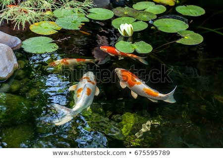 Vis vijver gouden zwemmen blad water Stockfoto © Soleil