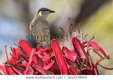 парка Квинсленд Австралия природы птица зеленый Сток-фото © dirkr