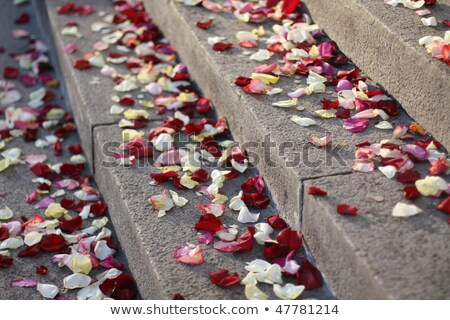 wedding petals of roses on red carpet stock photo © Ainat
