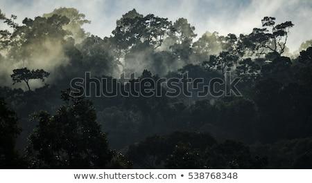 tájkép · park · Bangkok · Thaiföld · tó · naplemente - stock fotó © mcherevan