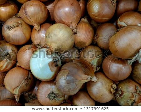 Egész hámozott barna hagyma fehér kész Stock fotó © juniart